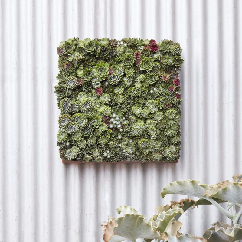 Modular Living Wall Panel Kit