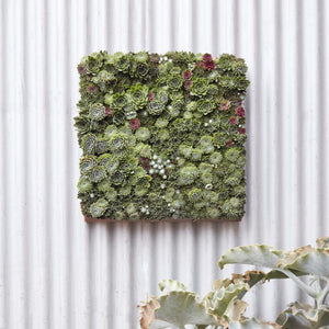 Planted Succulent Modular Wall Panel