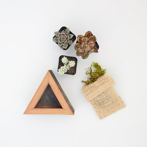 Succulent Planter Kit | Triangle | $19.50