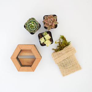 Succulent Planter Kit | Hexagon | $19.50