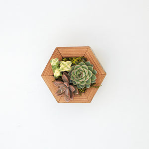 Succulent Hexagon Planter Kit