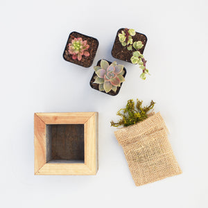 Small Succulent Planter Kit