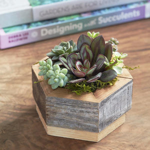 Succulent Planter | Hexagon Planter | $29.00 | Succulent Gardens