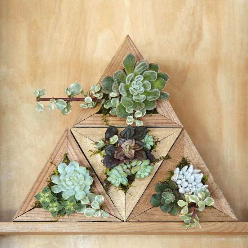 Succulent Triangle Planter Kit Gift