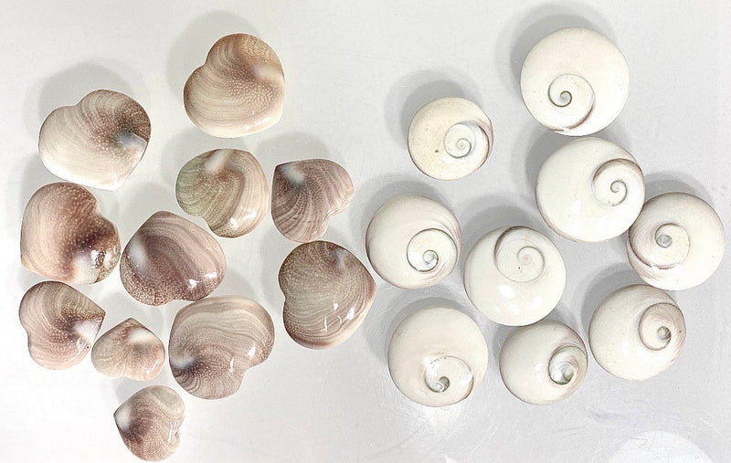 Shiva Eye Shells