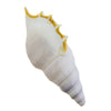 Sea Shell Hand Pipe