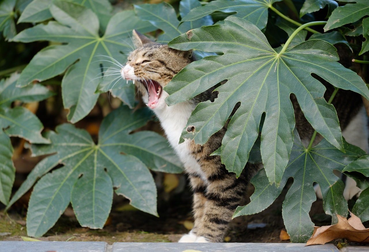 Cat trying to eat plant