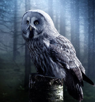 "Imagine this; you're walking through fog and all you can hear is the sound of an owl's ""whoo...."""