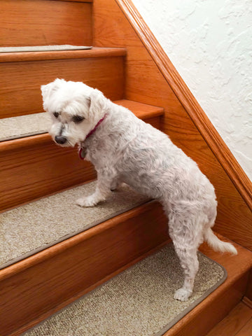 Milkshake on Attachable Carpet Stair Treads