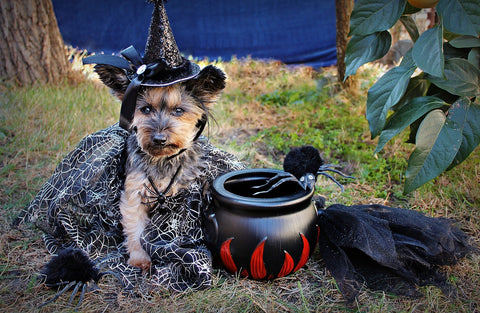 Witchy Pup!