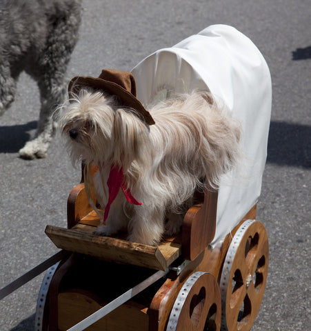 Dog and Buggy