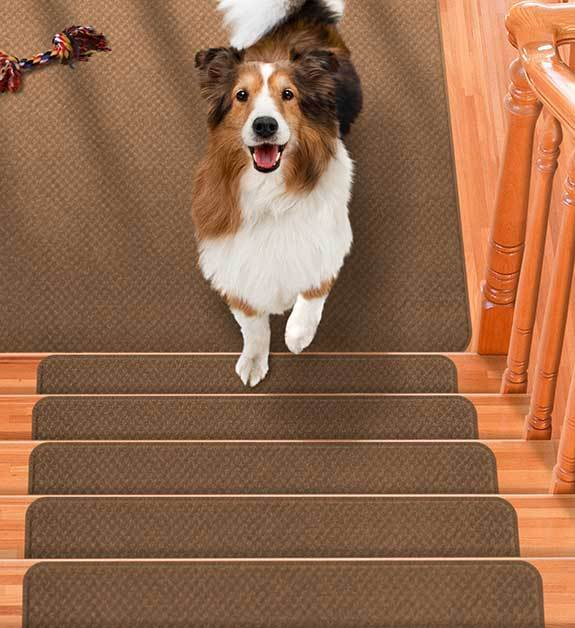 Pet Friendly Flooring Options Including Durable And Skid Resistant