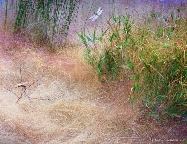 Muhly Grass Textures