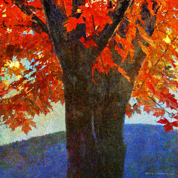 Brilliant Fall Maple I