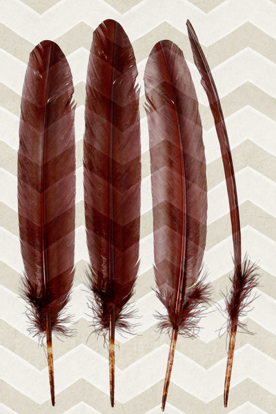 Feather Pair