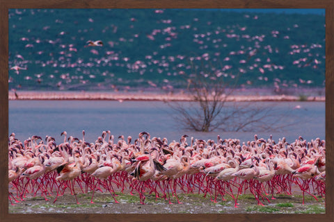 Flamingos at Large