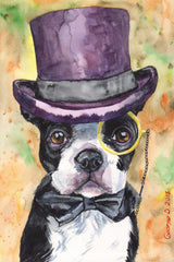 Intelligent Boston Terrier