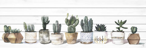 Cacti and Earth Tones