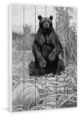 Bear in Hay BW