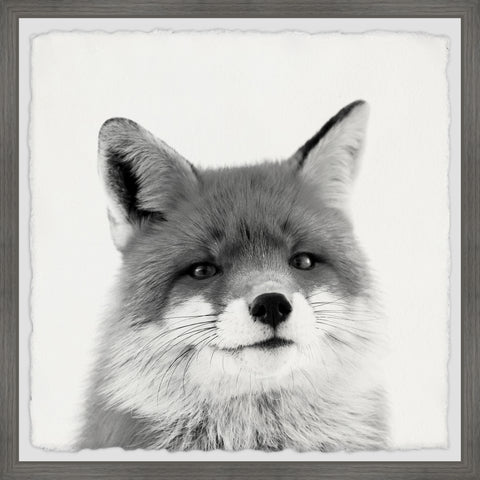 Handsome Fox