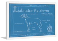 Blueprint Labrador Retriever
