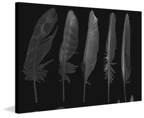 Feathers in the Dark