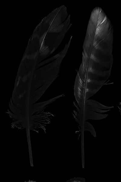 Gray Feather Pair