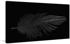 Dusty Feather