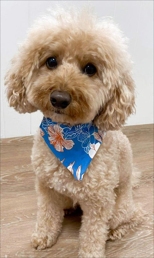 Carra Lee Active Pet accessories Hibiscus Kiss Doggy Bandana