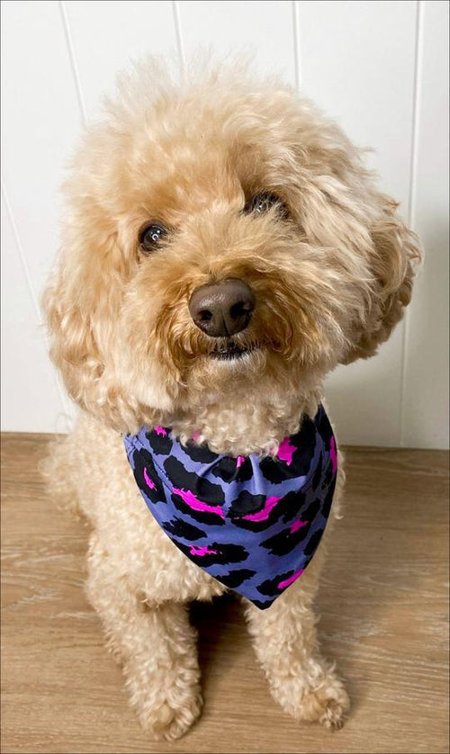 Carra Lee Active Pet accessories Pink Leopard Doggy Bandana