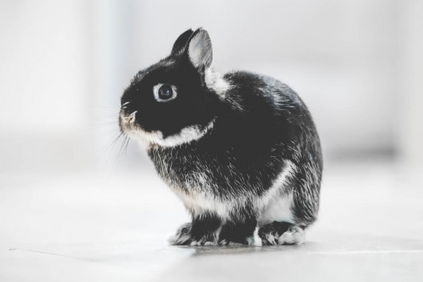 5 reasons to choose cruelty-free