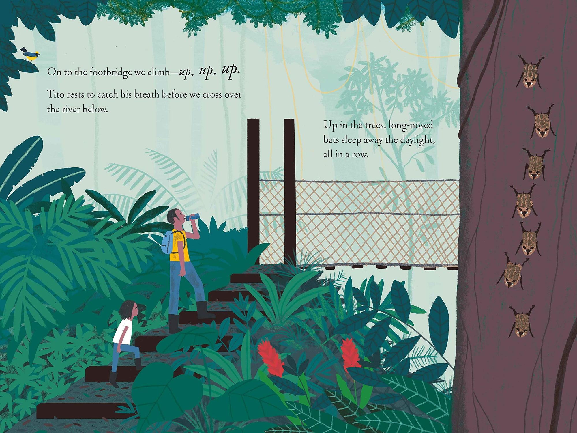 Kate Messner: Over and Under the Rainforest, Illustrated by Christopher Silas Neal