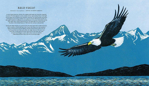 Magnificent Birds illustrated by Narisa Togo