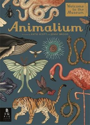 Animalium by Jenny Broom, illustrated by Katie Scott