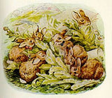 The Tale of the Flopsy Bunnies by Beatrix Potter
