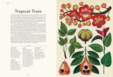 Jenny Broom: Botanicum, illustrated by Katie Scott