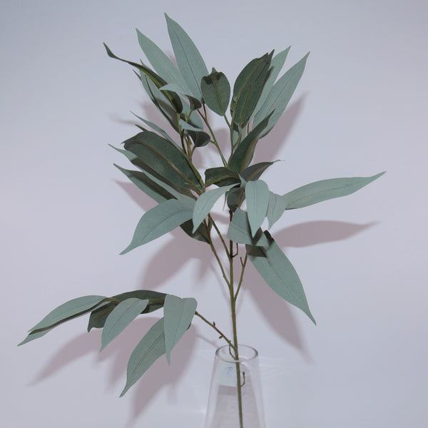 Long Leaf Eucalyptus Stems