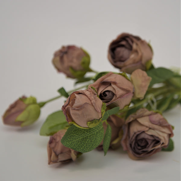 Dried Look Rose Stems