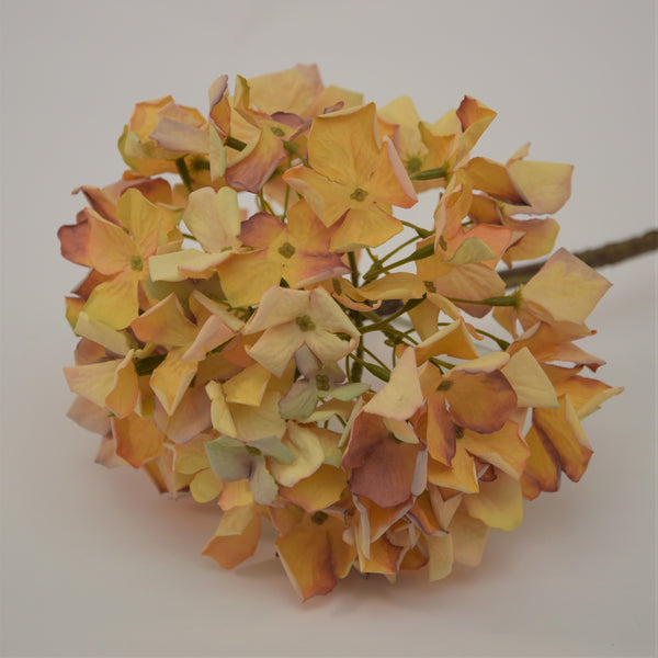 Dried Look Hydrangea Stems