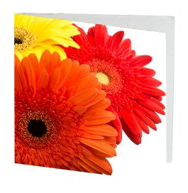 Large Square Cards - $3.00