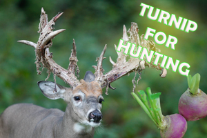 Turnip - Your Hunting Success
