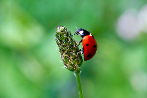 Using natural defences to manage pests in the garden