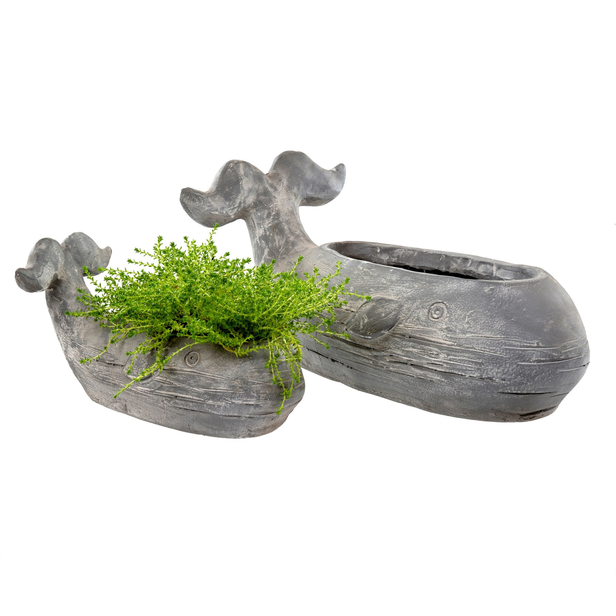 Grey Small Whale Planter