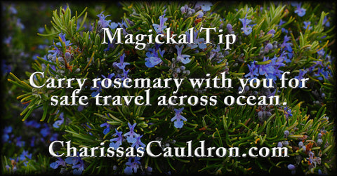 rosemary for travel
