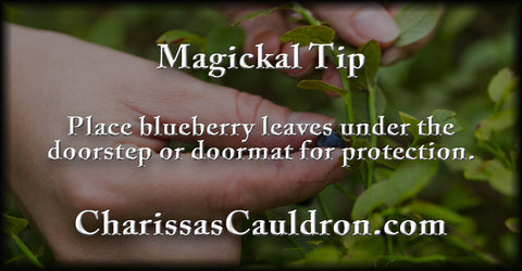 blueberry leaves for protection