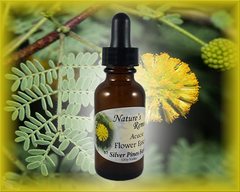 Acacia Flower Remedy