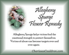 Allegheny Spurge Flower Essence