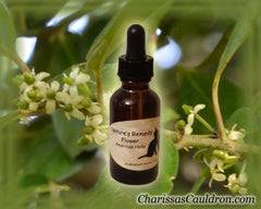 American Holly Flower Remedy