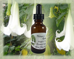 Angel's Trumpet Flower Essence - Nature's Remedies