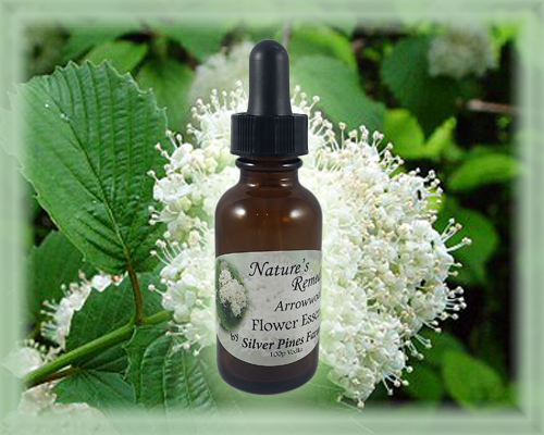 Arrowwood Flower Essence